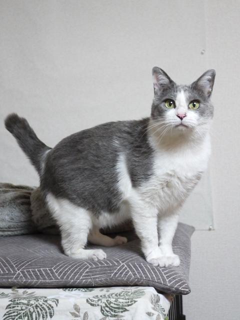 猫のお留守番 赤福くん編。_a0143140_23013214.jpg