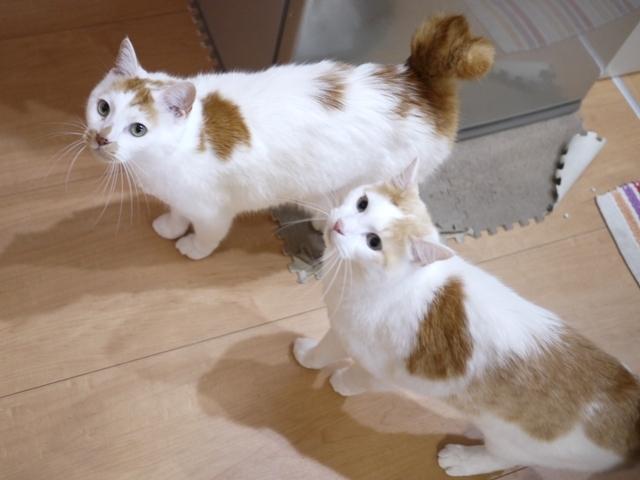 猫のお留守番 開くん咲くん編。_a0143140_23133567.jpg