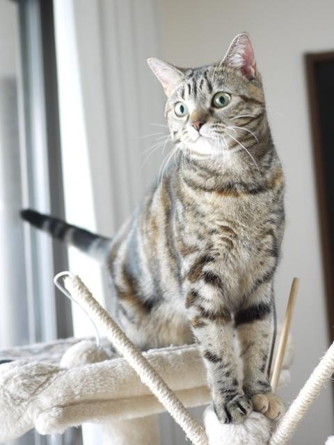 猫のお留守番 モルディブちゃん編。_a0143140_23174603.jpg