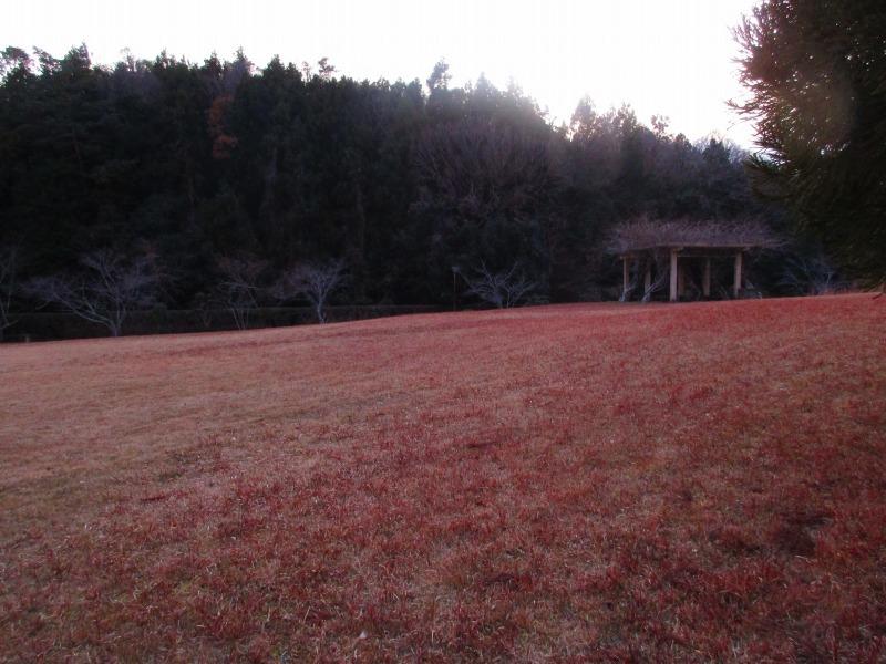 植物「一足早く桜を見る」_b0362459_15213081.jpg