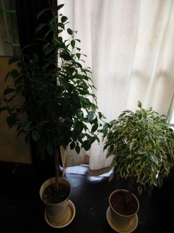 植物「一足早く桜を見る」_b0362459_16390660.jpg