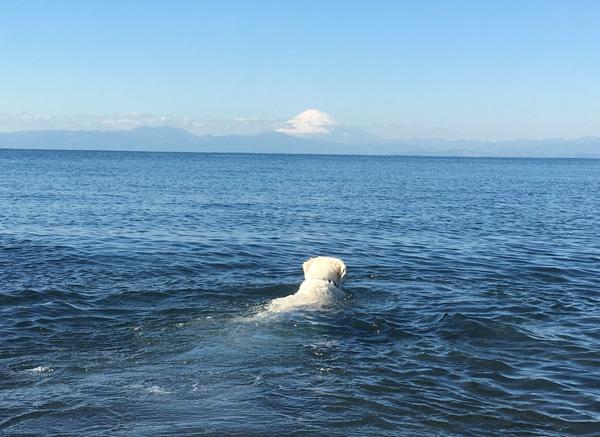 2020年初泳ぎ!_c0110361_13295668.jpg