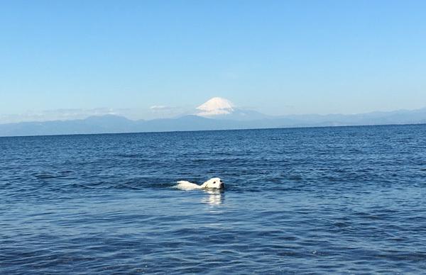 2020年初泳ぎ!_c0110361_13301567.jpg