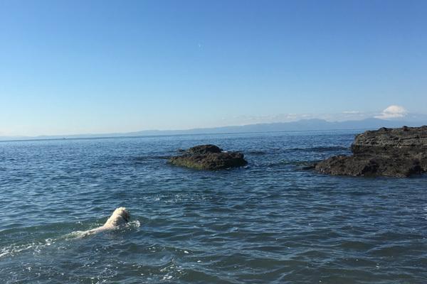 2020年初泳ぎ!_c0110361_13302433.jpg