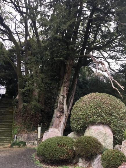 遍路・67番札所大興寺(三豊市香川県)と、かやの木_d0339676_12313003.jpg