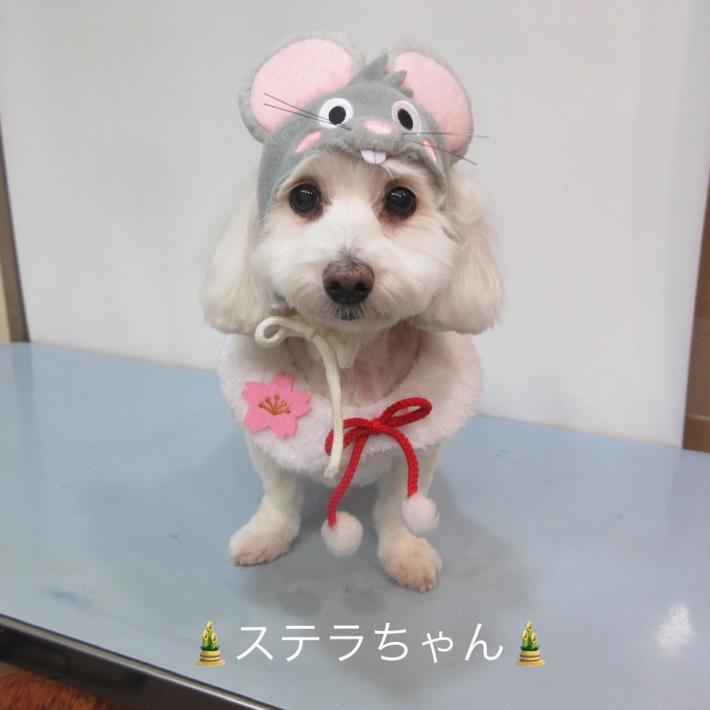 今年もどうぞよろしくお願いいたします☆彡~手作り簡単おせち料理と動物いっぱいのお正月~_e0397681_04415362.jpg