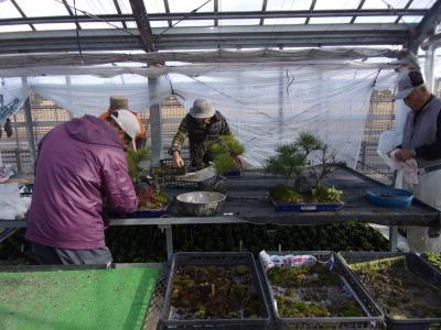 正月用寄せ植え盆栽の展示の様子_d0338682_17025568.jpg
