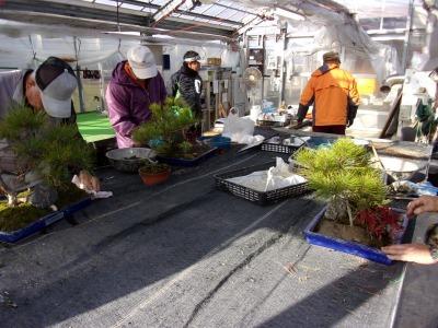 正月用寄せ植え盆栽の展示の様子_d0338682_17030253.jpg