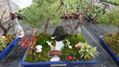 正月用寄せ植え盆栽の展示の様子_d0338682_17034242.jpg