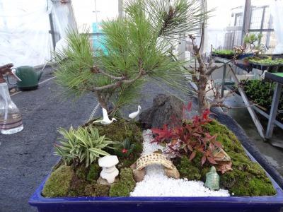 正月用寄せ植え盆栽の展示の様子_d0338682_17040657.jpg