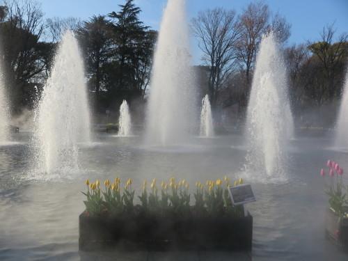 恩賜上野公園の噴水の花壇はチュリップが満開_c0075701_23263487.jpg