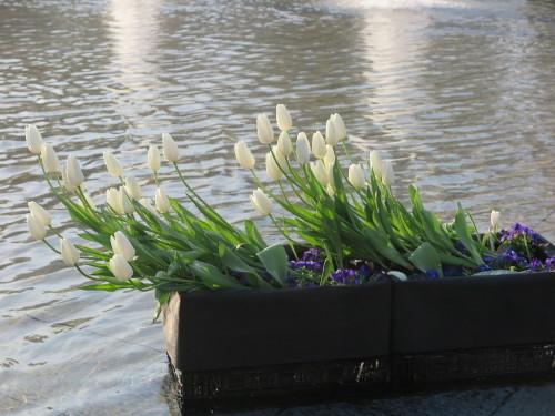 恩賜上野公園の噴水の花壇はチュリップが満開_c0075701_23305365.jpg