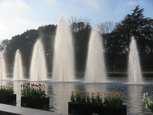 恩賜上野公園の噴水の花壇はチュリップが満開_c0075701_23323828.jpg