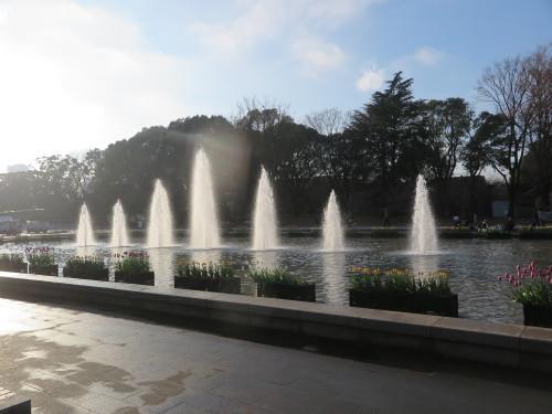 恩賜上野公園の噴水の花壇はチュリップが満開_c0075701_23332601.jpg