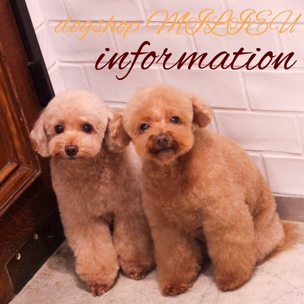 ☆ Informaition ☆_d0060413_18223535.jpg