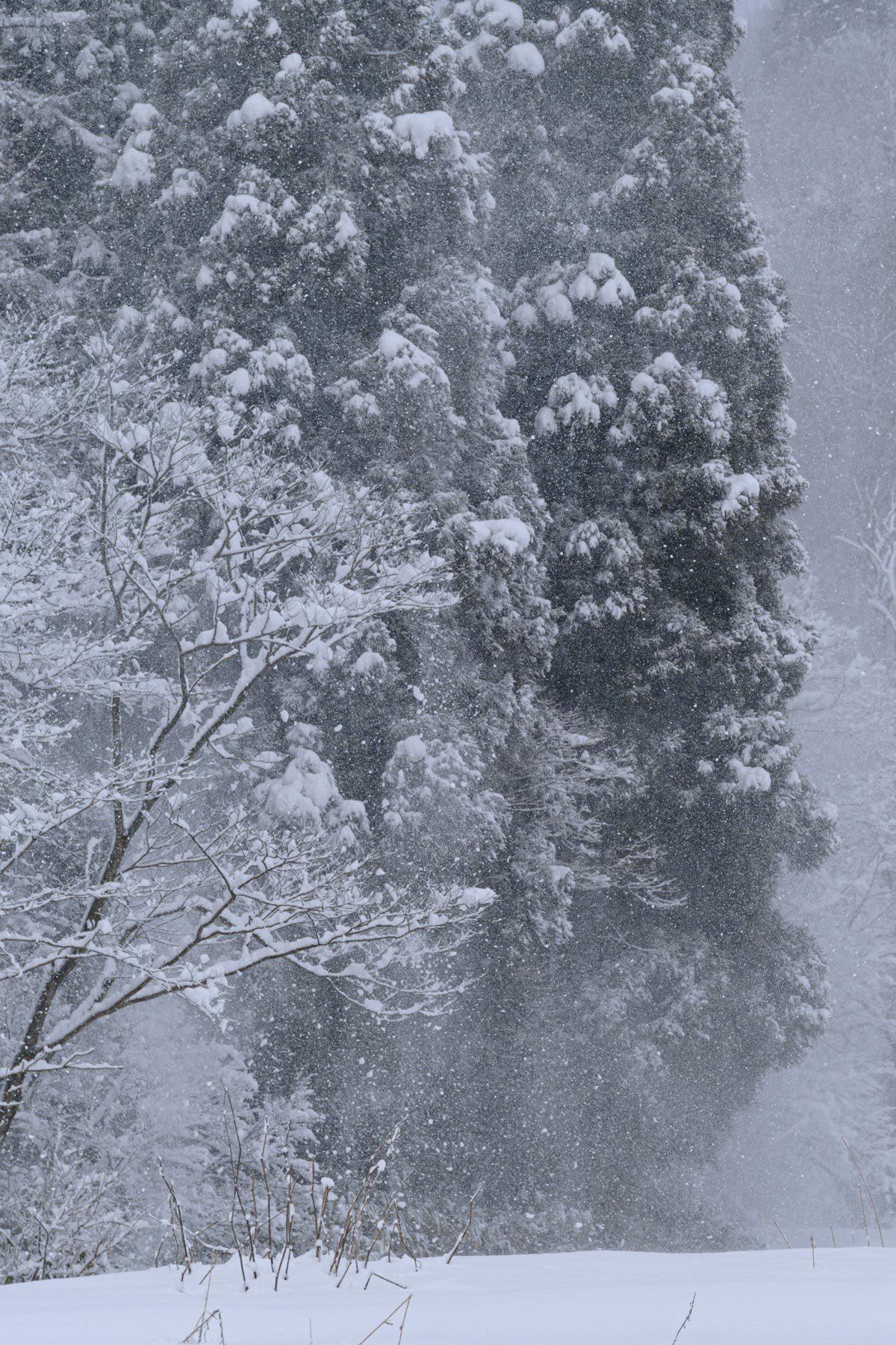 Winter monochrome_a0041722_22051786.jpg