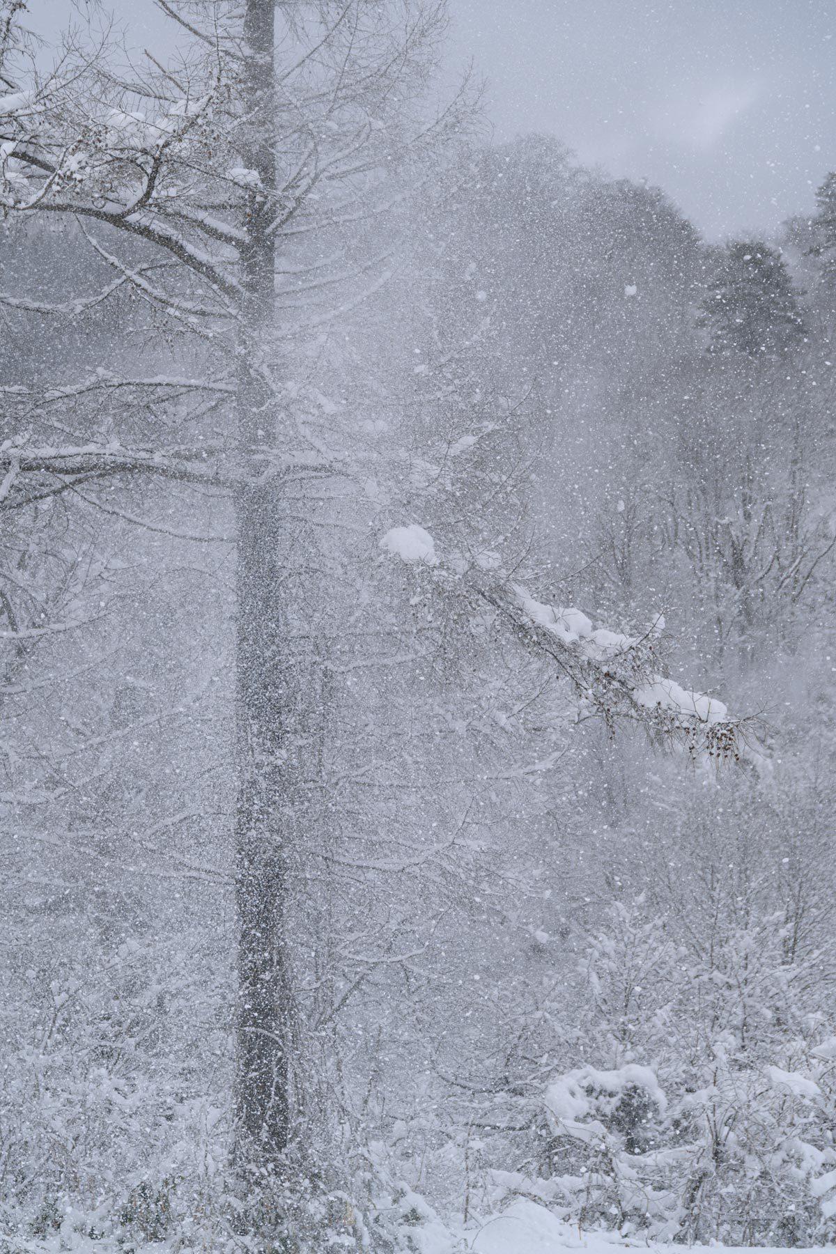 Winter monochrome_a0041722_22052259.jpg