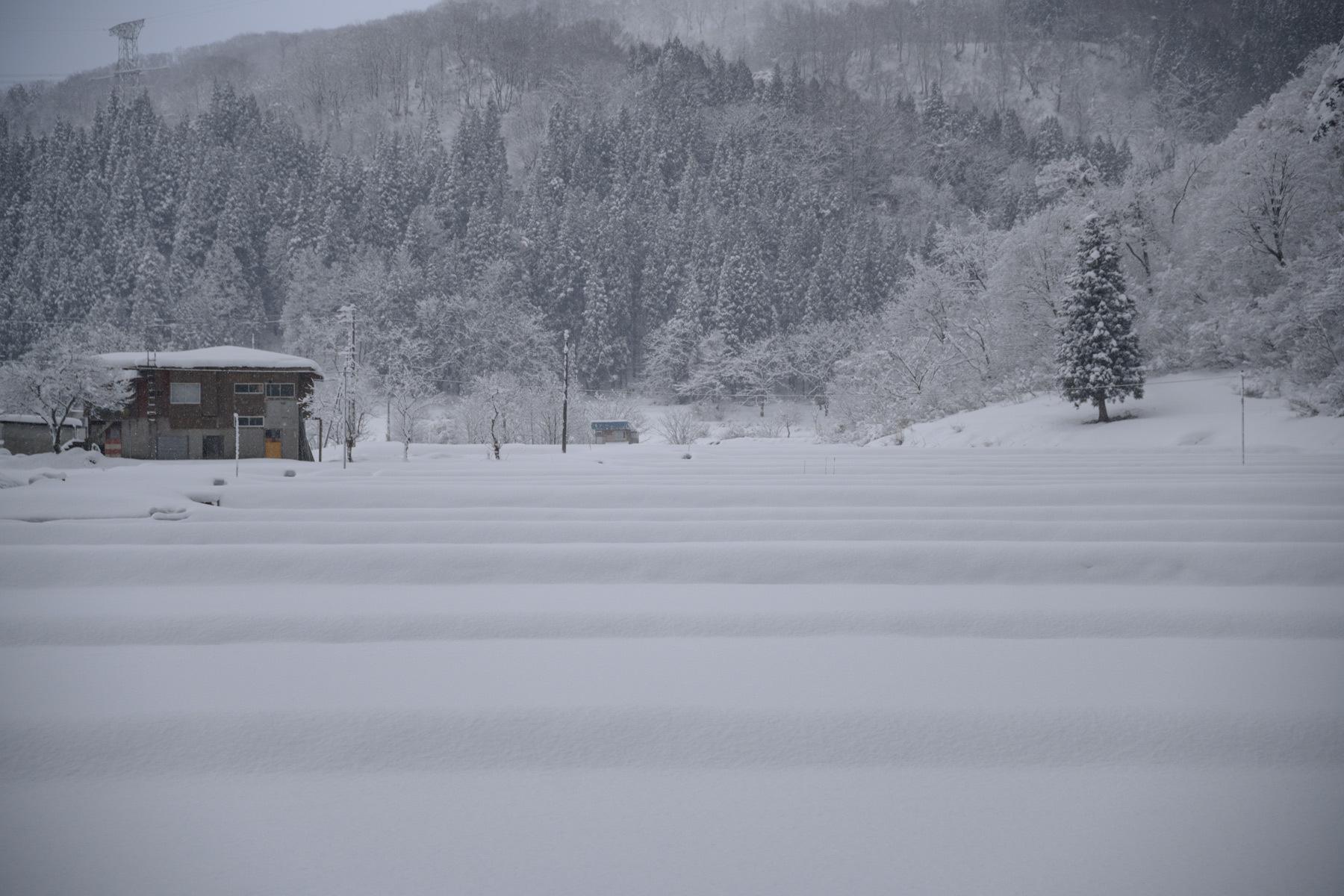 Winter monochrome_a0041722_22052628.jpg