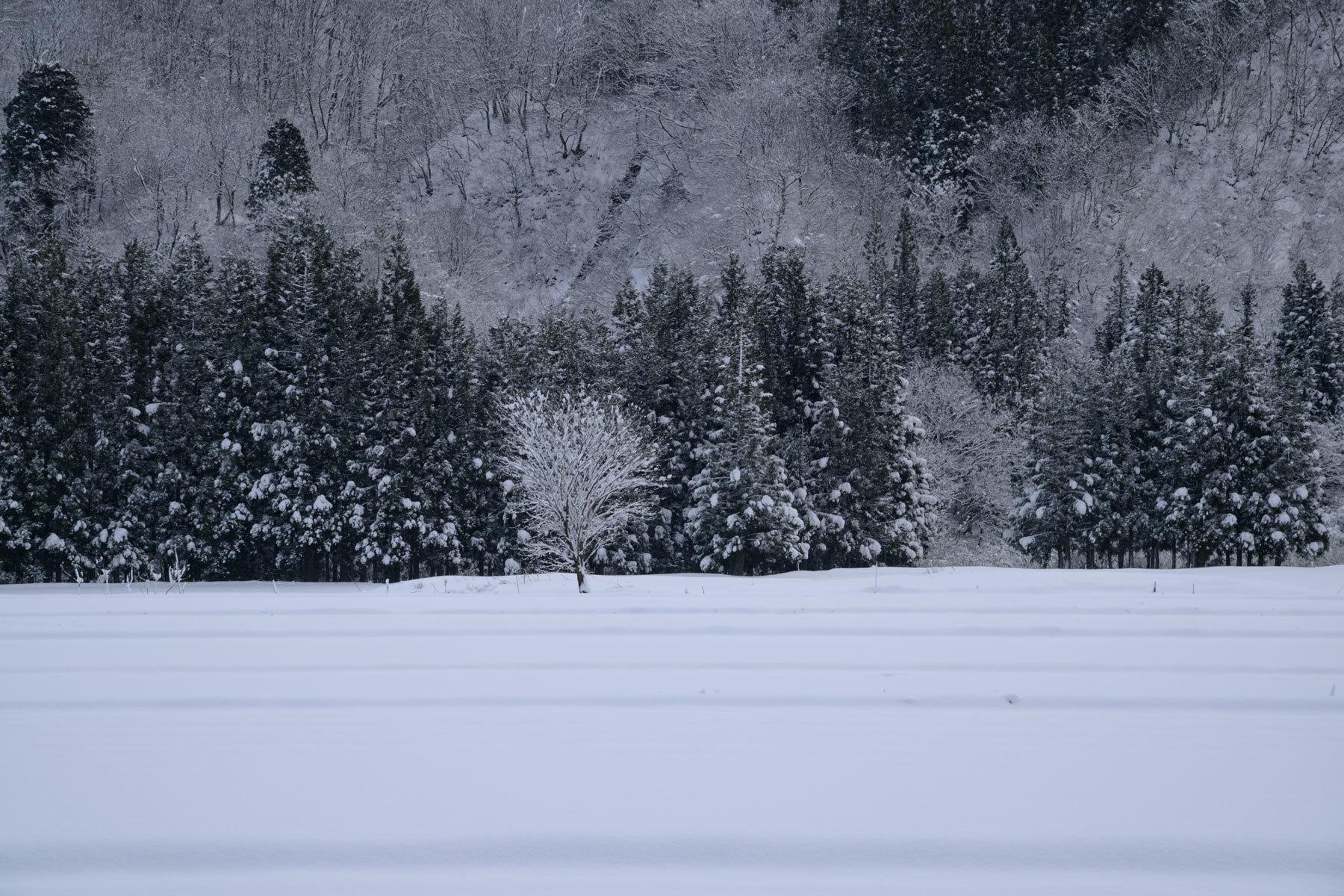 Winter monochrome_a0041722_22053085.jpg