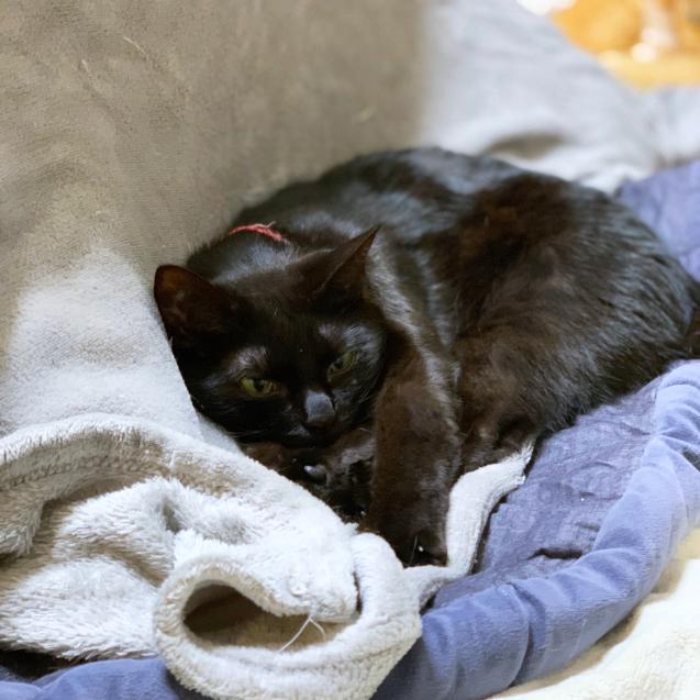 猫はおうちが一番。_d0355333_22474755.jpg