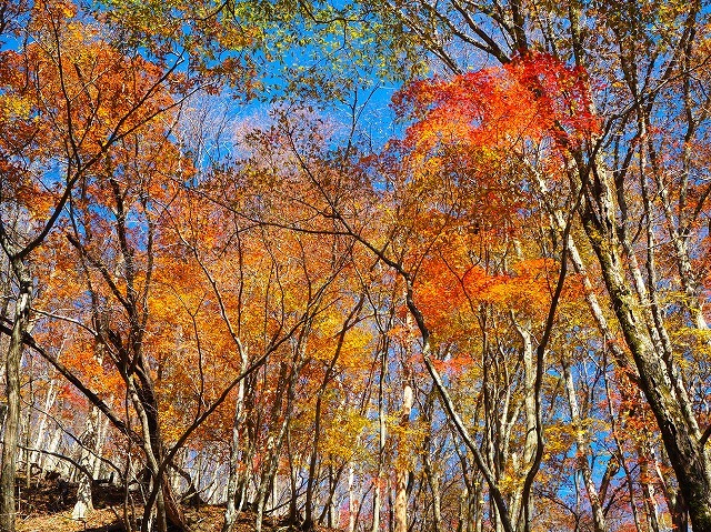 2019/11/21  【鈴鹿】御池 ~ ゴロ谷から薄雪のテーブルそしてアザミ谷 ~_e0403837_23143873.jpg