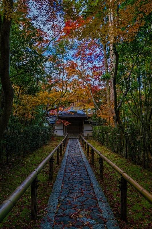 2019京都紅葉~高桐院_e0363038_11290168.jpg