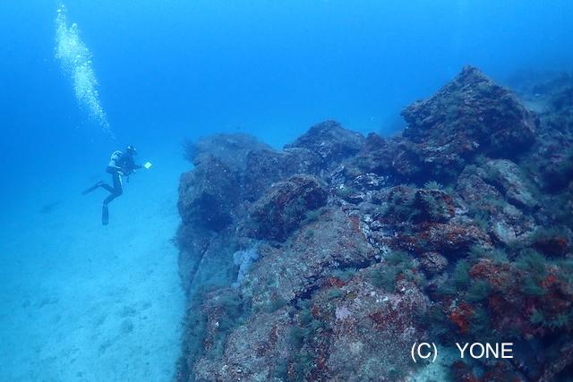 今日も透明度抜群の川奈の海から 〜カエルアンコウいろいろ〜_b0163039_16434999.jpg