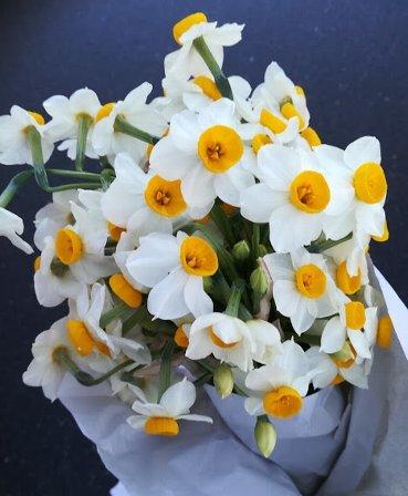 今週の花と、今年の運勢_b0149340_19354159.jpg