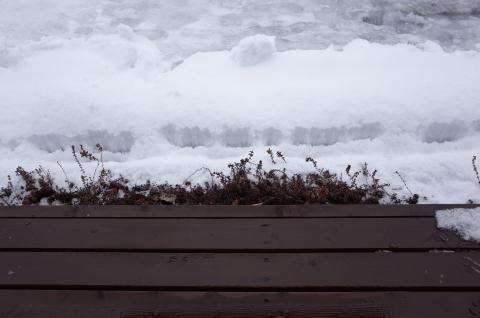 雪からの雨。_b0207642_14345619.jpg