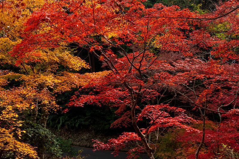 紅葉が彩る滋賀2019 染まる不動寺_f0155048_062286.jpg