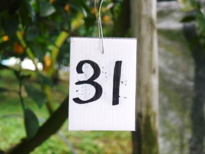令和2年の熊本限定栽培品種!樹上完熟デコポン(肥後ポン)『ひのゆたか』本日初収穫&初出荷!!(後編)_a0254656_17181312.jpg