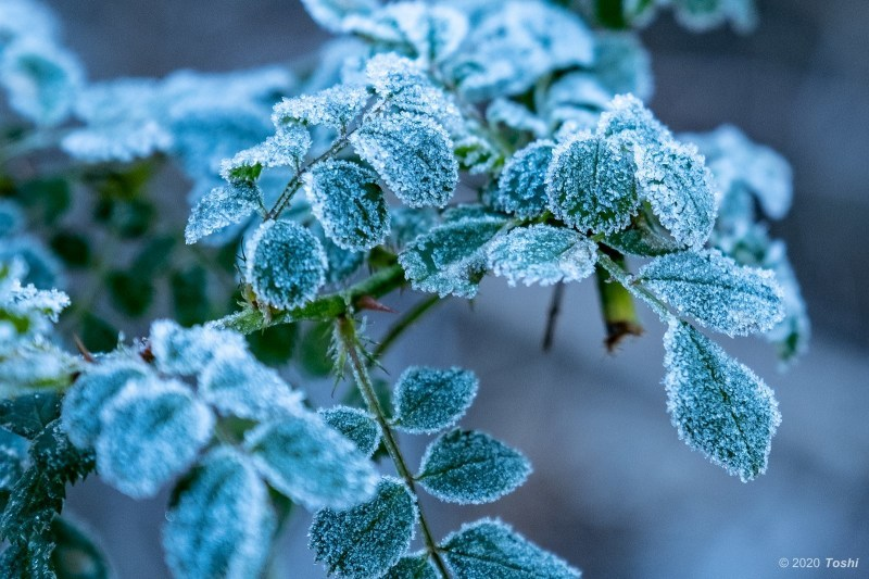 南紀にも霜はある_c0350572_22223912.jpg