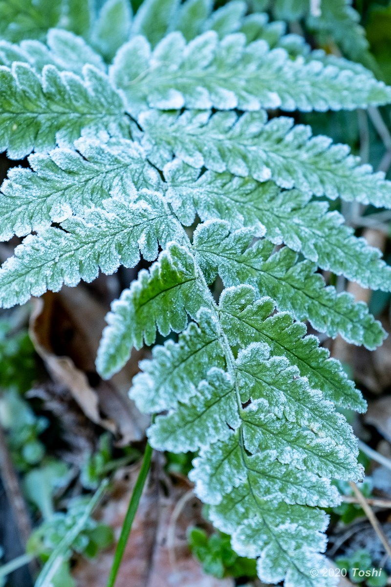 南紀にも霜はある_c0350572_22235124.jpg