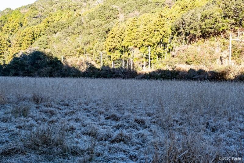 南紀にも霜はある_c0350572_22235743.jpg