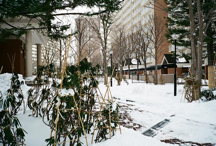除雪機の保守運転と松の内の管理棟と石楠花_c0182775_1723918.jpg