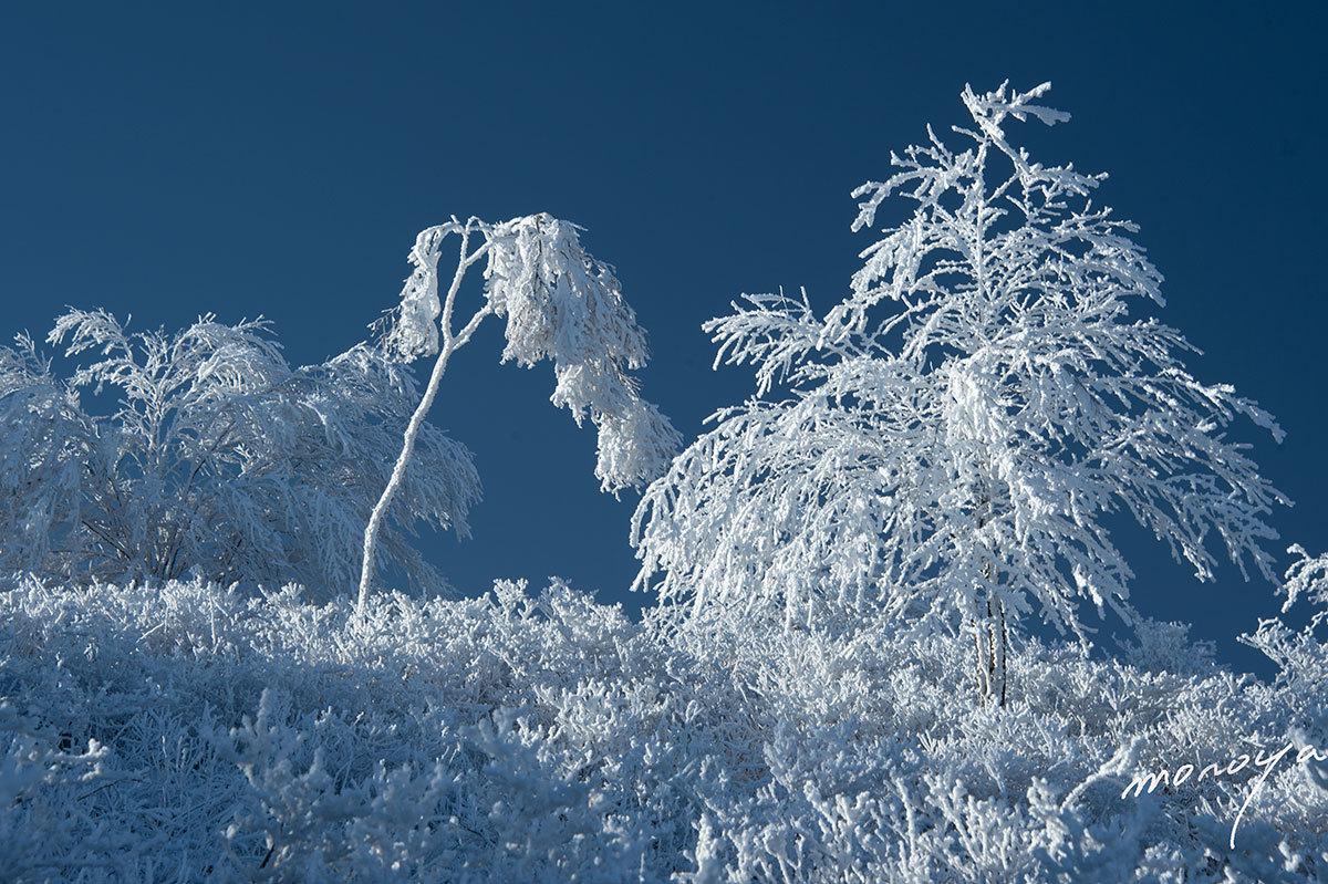 樹氷の高原_c0085877_06015502.jpg