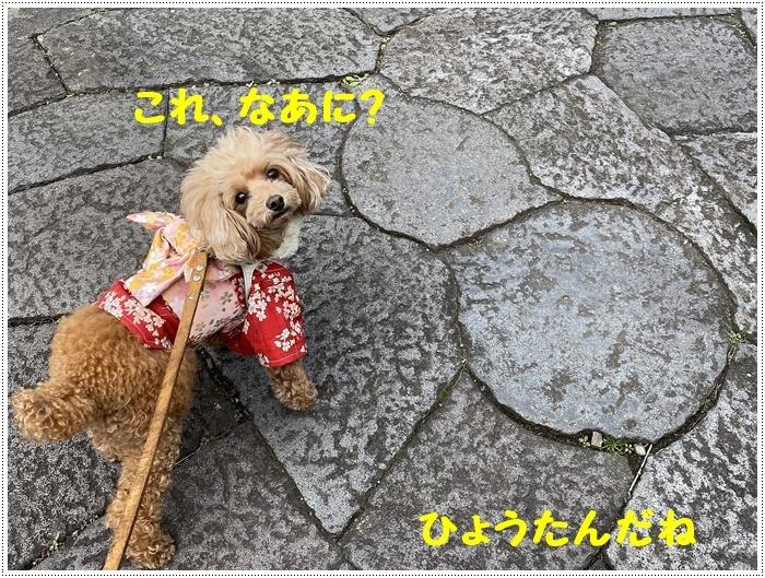 お正月休み最後の1日、別府での初詣は、初めての朝見神社でした\\(>3(O^-)/ウフ☆_b0175688_00423716.jpg