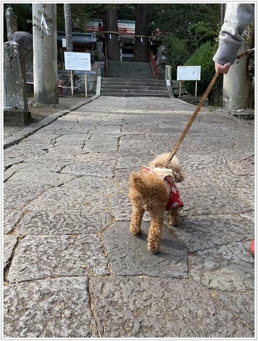 お正月休み最後の1日、別府での初詣は、初めての朝見神社でした\\(>3(O^-)/ウフ☆_b0175688_00444802.jpg