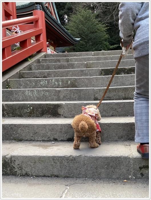 お正月休み最後の1日、別府での初詣は、初めての朝見神社でした\\(>3(O^-)/ウフ☆_b0175688_00450281.jpg
