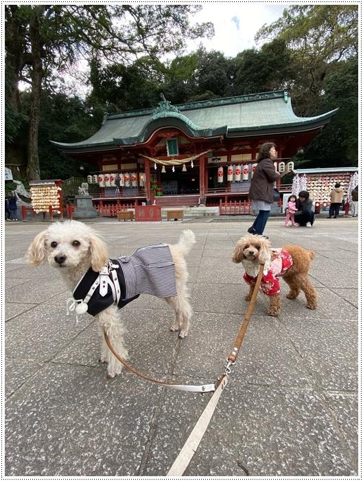 お正月休み最後の1日、別府での初詣は、初めての朝見神社でした\\(>3(O^-)/ウフ☆_b0175688_00484231.jpg