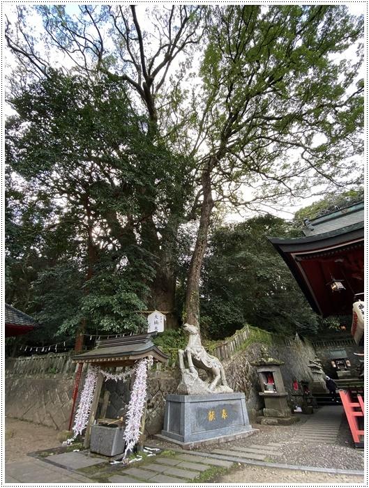 お正月休み最後の1日、別府での初詣は、初めての朝見神社でした\\(>3(O^-)/ウフ☆_b0175688_00544220.jpg