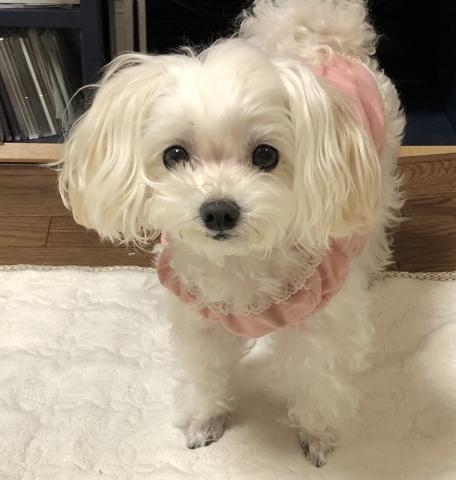 愛犬のお正月_d0233891_09261567.jpg