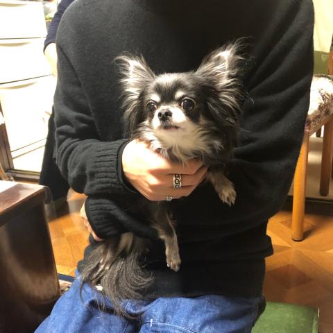 愛犬のお正月_d0233891_09390574.jpg