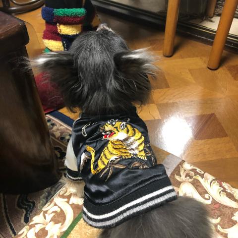 愛犬のお正月_d0233891_09442220.jpg