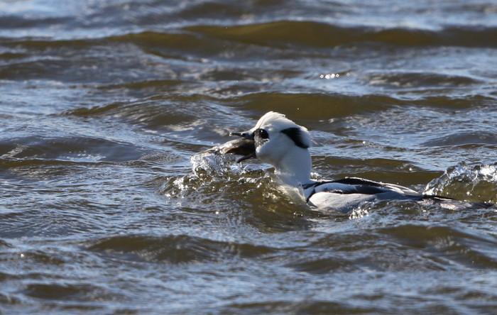 MFの沼で鳥たちの食事場面を見る事ができました_f0239515_1710370.jpg