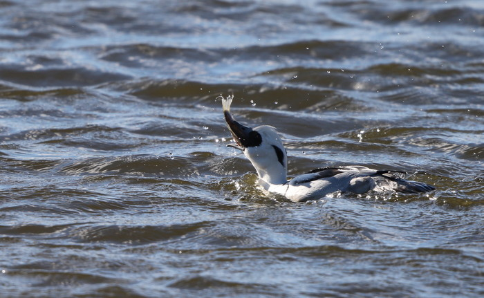 MFの沼で鳥たちの食事場面を見る事ができました_f0239515_17104911.jpg