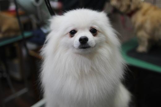 1月4日ご来店のワンちゃんです!!_b0130018_09454954.jpg
