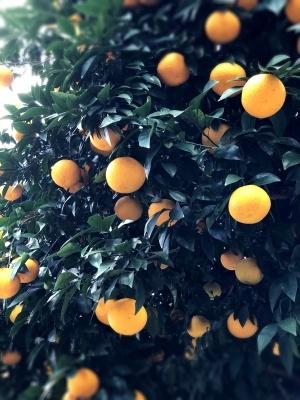 オレンジがいっぱい_d0026822_10545976.jpeg