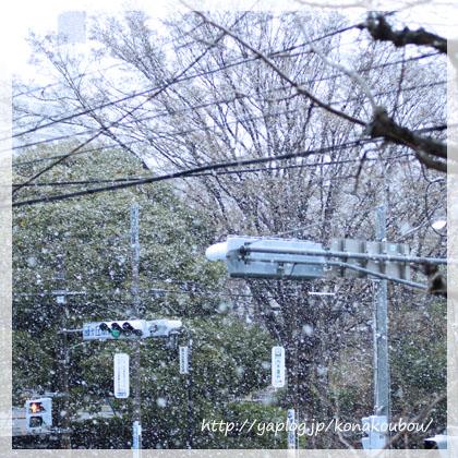 すごい雪で。_a0392423_00151007.jpg