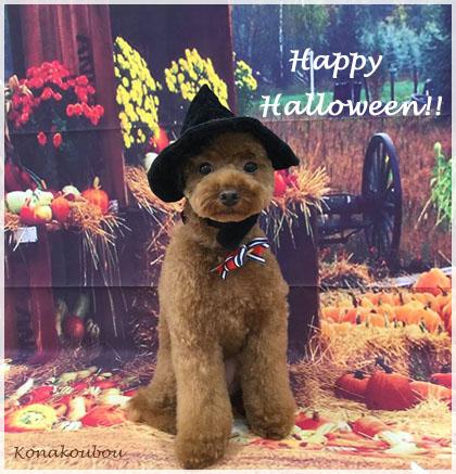 Happy Halloween!_a0392423_00155796.jpg